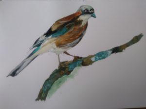 The Jay by Francine Davies Art