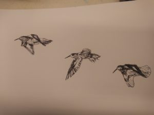 The purple Sandpipers in Flight, Ogmore by Sea, vale of Glamorgan, by Francine Davies Art